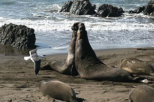 Adventure 22: Elephant Seals, Wine, Beer, and Food!