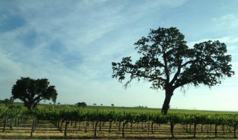 Paso Robles, Wine Blogging, and What We Really Do