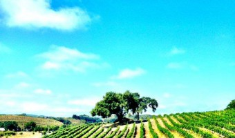 Paso Robles Wine Country: What's Your Favorite?