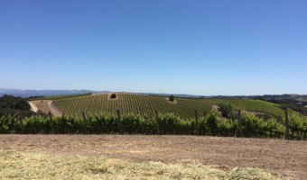 Alta Colina Vineyard Focus Tasting