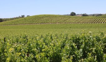 SLO COUNTY AND PASO ROBLES AMERICAN VITICULTURAL AREA ECONOMIC IMPACT