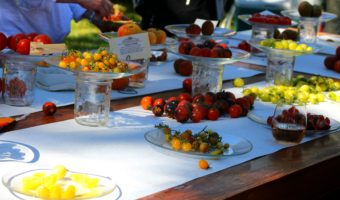 Heirloom Tomato Festival at Windrose Farm