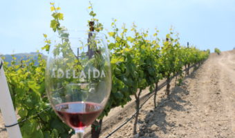 A Vineyard Tour at Adelaida Vineyards & Winery