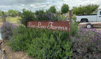 Spring Gardening Project with Loo Loo Farms